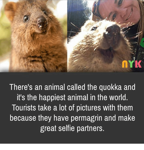 There's an Animal Called the Quokka and It's the Happiest ...