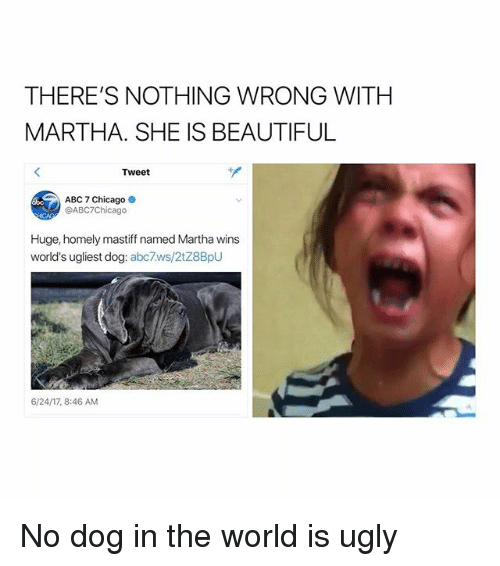 Abc, Beautiful, and Chicago: THERE'S NOTHING WRONG WITHH  MARTHA. SHE IS BEAUTIFUL  Tweet  ABC 7 Chicago  @ABC7Chicago  Huge, homely mastiff named Martha wins  world's ugliest dog: abc7ws/2tZ8BpU  6/24/17, 8:46 AM No dog in the world is ugly