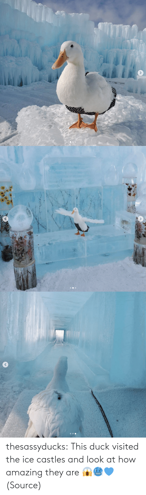 Instagram, Target, and Tumblr: thesassyducks: This duck visited the ice castles and look at how amazing they are 😱🥶💙 (Source)
