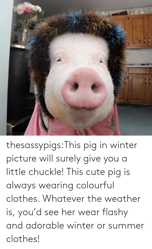 Clothes, Cute, and Target: thesassypigs:This pig in winter picture will surely give you a little chuckle! This cute pig is always wearing colourful clothes. Whatever the weather is, you'd see her wear flashy and adorable winter or summer clothes!