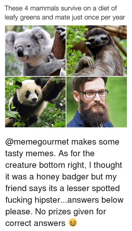 Fucking, Hipster, and Ironic: These 4 mammals survive on a diet of  leafy greens and mate just once per year  me  gourm @memegourmet makes some tasty memes. As for the creature bottom right, I thought it was a honey badger but my friend says its a lesser spotted fucking hipster...answers below please. No prizes given for correct answers 😆