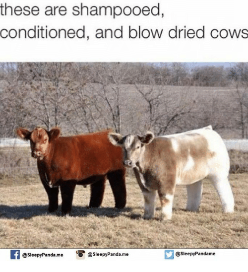 Dried Cow