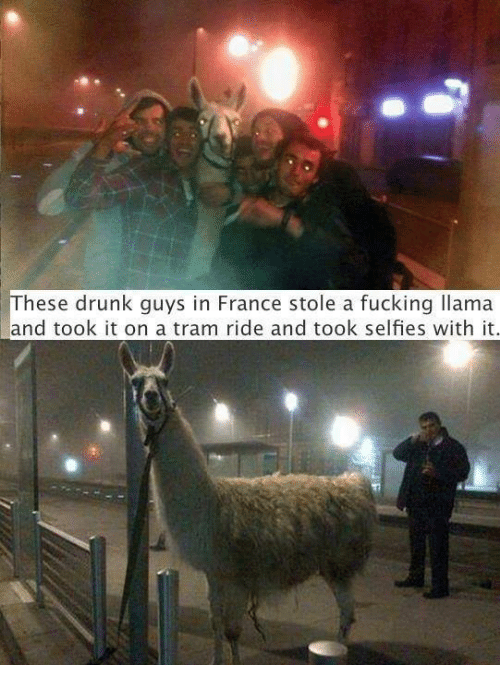 These Drunk Guys In France Stole A Fucking Llama And Took It On A