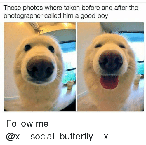 Memes, Taken, and Butterfly: These photos where taken before and after the  photographer called him a good boy Follow me @x__social_butterfly__x