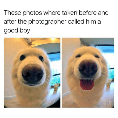Taken, Good, and Boy: These photos where taken before and  after the photographer called hima  good boy
