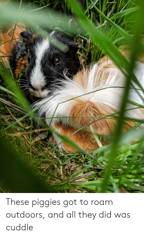 Got, Did, and All: These piggies got to roam outdoors, and all they did was cuddle