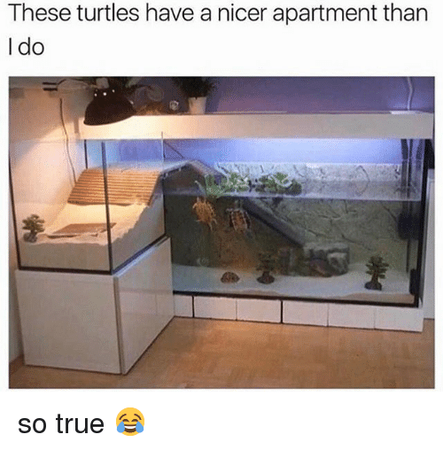 Memes, True, and 🤖: These turtles have a nicer apartment tharn  I do so true 😂