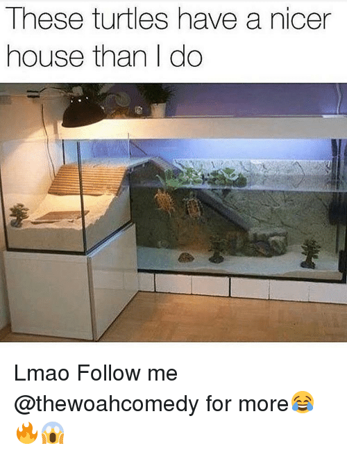 Memes, 🤖, and Turtles: These turtles have a nicer  house than I do Lmao Follow me @thewoahcomedy for more😂🔥😱