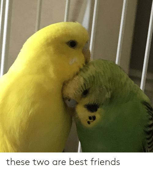 These Two Are Best Friends   Friends Meme on ME ME