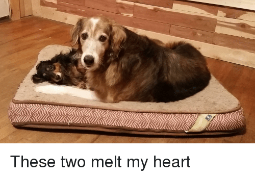 Heart, My Heart, and  Two