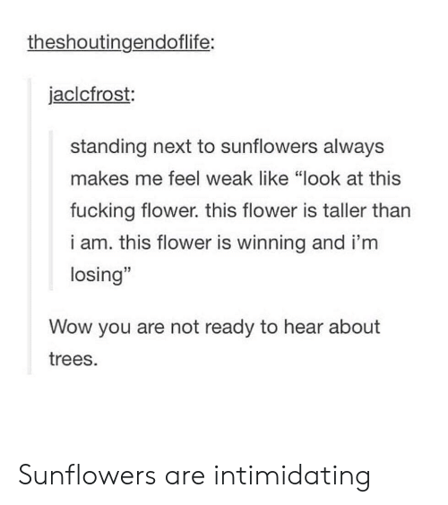 "Fucking, Wow, and Flower: theshoutingendoflife:  jaclcfrost:  standing next to sunflowers always  makes me feel weak like ""look at this  fucking flower. this flower is taller tharn  i am. this flower is winning and i'm  losing""  Wow you are not ready to hear about  trees. Sunflowers are intimidating"