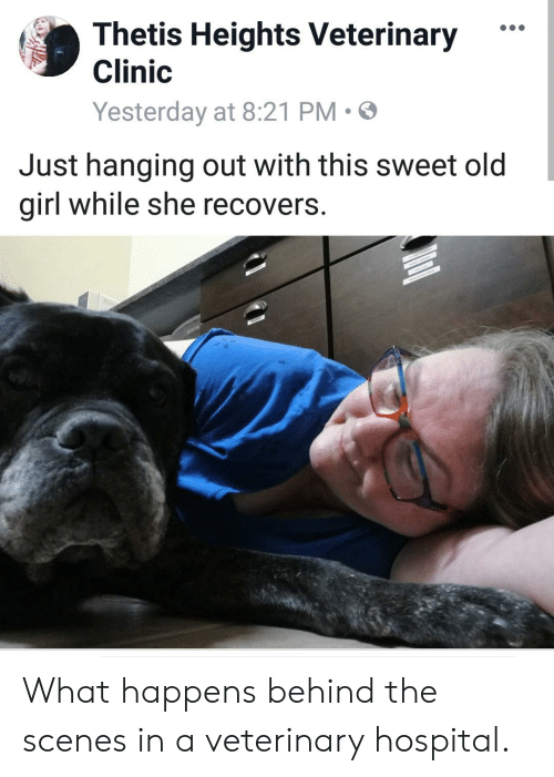 """Girl, Hospital, and Old: Thetis Heights Veterinary""""  Clinic  Yesterday at 8:21 PM  Just hanging out with this sweet old  girl while she reco  vers. What happens behind the scenes in a veterinary hospital."""