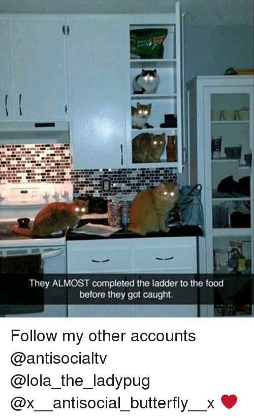 Food, Memes, and Butterfly: They ALMOST completed the ladder to the food  before they got caught. Follow my other accounts @antisocialtv @lola_the_ladypug @x__antisocial_butterfly__x ❤️