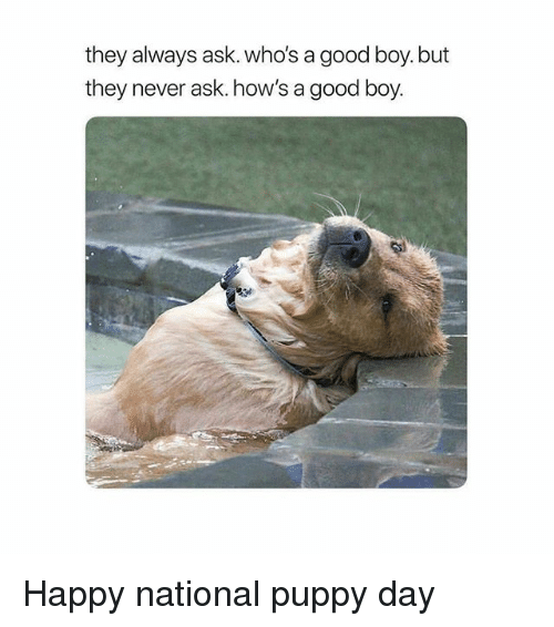 Memes, Good, and Happy: they always ask. who's a good boy. but  they never ask. how's a good boy. Happy national puppy day