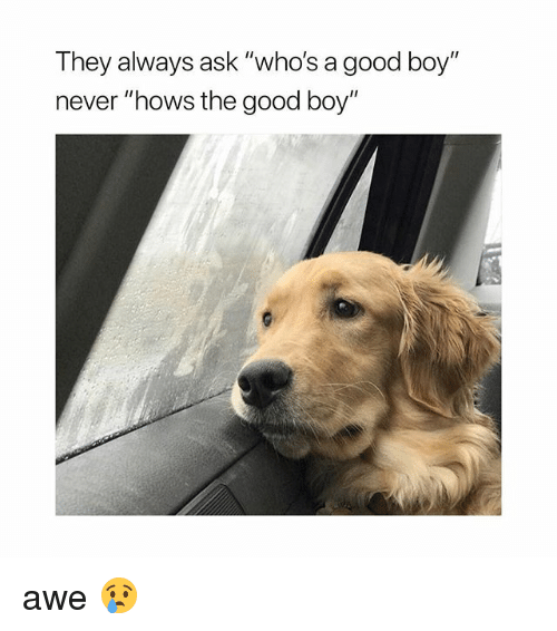 "Good, Girl Memes, and Never: They always ask ""who's a good boy""  never ""hows the good boy"" awe 😢"