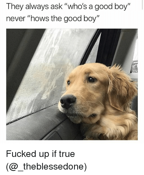 "Memes, True, and Good: They always ask ""who's a good boy  never ""hows the good boy"" Fucked up if true (@_theblessedone)"