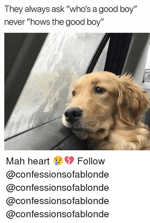 """Memes, Good, and Heart: They always ask """"who's a good boy""""  never """"hows the good boy"""" Mah heart 😢💔 Follow @confessionsofablonde @confessionsofablonde @confessionsofablonde @confessionsofablonde"""