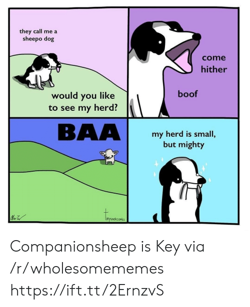 Mighty, Boof, and Dog: they call me a  sheepo dog  come  hither  boof  would you like  to see my herd?  BAA  my herd is small,  but mighty  inysnekconics Companionsheep is Key via /r/wholesomememes https://ift.tt/2ErnzvS
