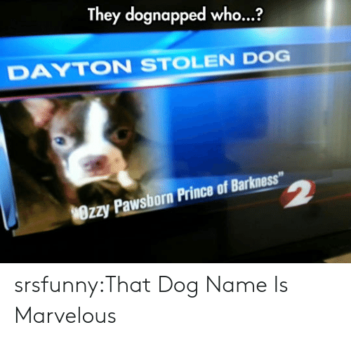 """Prince, Tumblr, and Blog: They dognapped who...?  DAYTON STOLEN DOG  Wrzy Pawsborn Prince of Barkness"""" srsfunny:That Dog Name Is Marvelous"""
