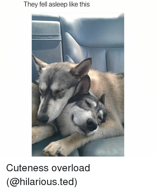 Funny, Ted, and Hilarious: They fell asleep like this Cuteness overload (@hilarious.ted)