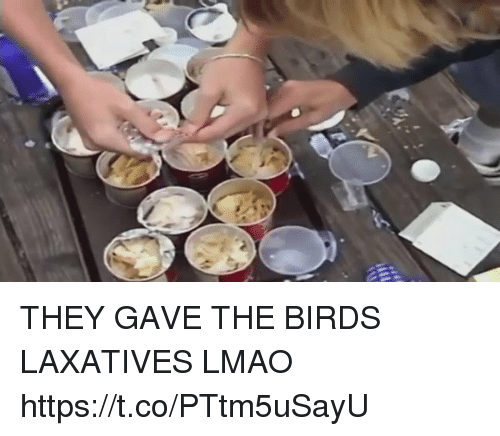 Funny, Lmao, and Birds: THEY GAVE THE BIRDS LAXATIVES LMAO https://t.co/PTtm5uSayU