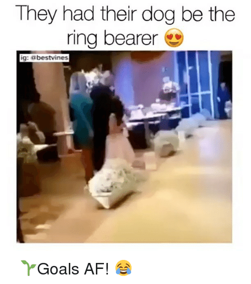 Memes, 🤖, and Afs: They had their dog be the  ring bearer  9  ig: abestvines ⠀ 🌱Goals AF! 😂