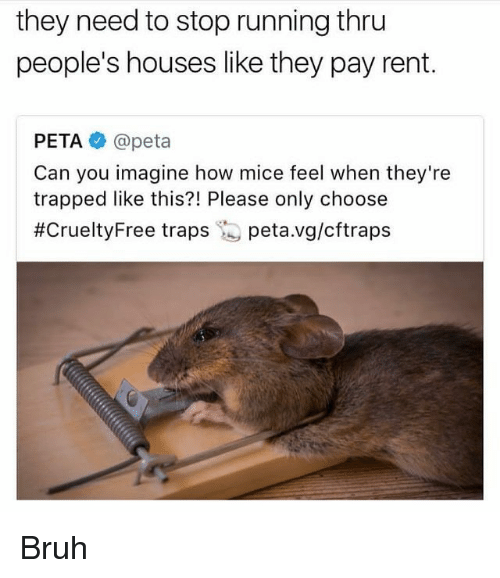 Bruh, Funny, and Peta: they need to stop running thru  people's houses like they pay rent.  PETA @peta  Can you imagine how mice feel when they're  trapped like this?! Please only choose  #CrueltyFree traps is peta.vg/cftraps Bruh