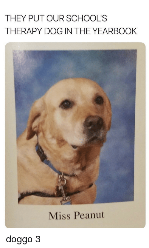 Doggo, Dog, and They: THEY PUT OUR SCHOOL'S  THERAPY DOG IN THE YEARBOOK  Miss Peanut doggo 3