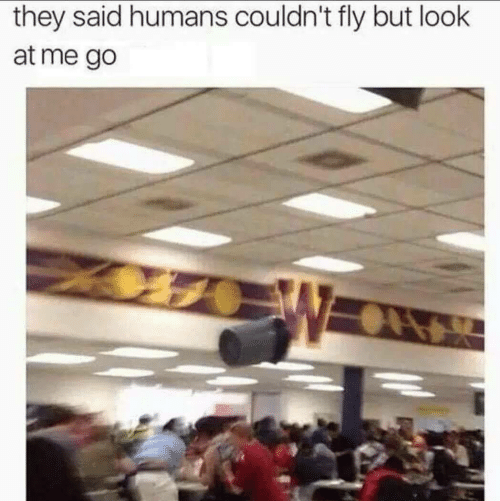 Fly, They, and Look: they said humans couldn't fly but look  at me go