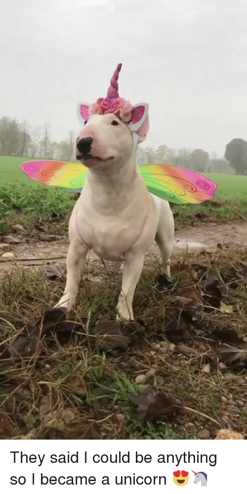 Unicorn, They, and They Said I Could Be Anything: They said I could be anything so I became a unicorn 😍🦄