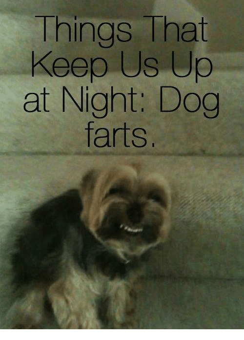 a2a0ff814b Things That Keep Us Up at Night Dog Farts | Dogs Meme on ME.ME