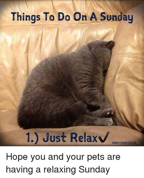 Things To Do On A Sunday 1 Just Relax Hope You And Your Pets Are