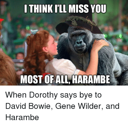 Think Ill Miss You Most Of All Harambe When Dorothy Says Bye To