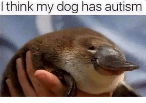 think my dog has autism 6274059 think my dog has autism dogs meme on me me,Dank Memes Dog