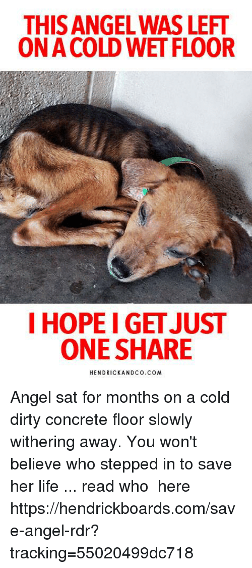 Life, Memes, and Dirty: THIS ANGEL WAS LEFT  ON A COLD WET FLOOR  I HOPEI GET JUS  ONE SHARE  HENDRICKANDCO.COM Angel sat for months on a cold dirty concrete floor slowly withering away. You won't believe who stepped in to save her life ... read who ► here https://hendrickboards.com/save-angel-rdr?tracking=55020499dc718