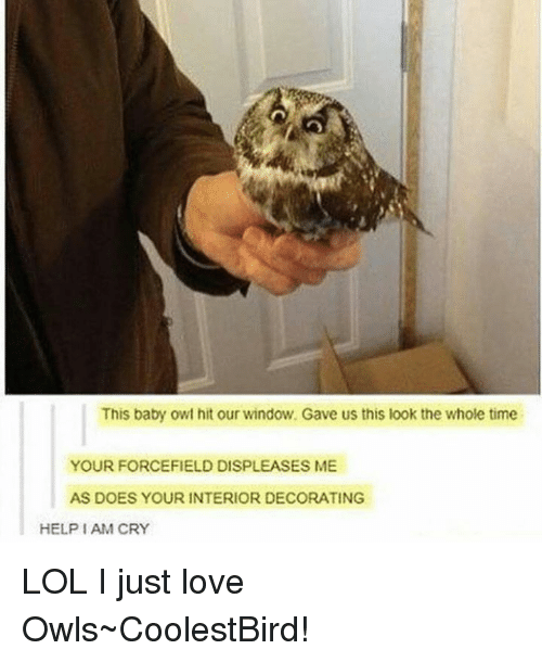 25+ Best Memes About Baby Owls | Baby Owls Memes