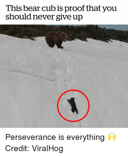 Bear, Perseverance, and Never: This bear cub is proof that you  should never give up Perseverance is everything 🙌  Credit: ViralHog