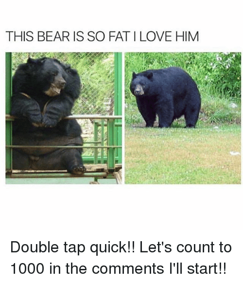 Love, Memes, and Bear: THIS BEAR IS SO FAT I LOVE HIM Double tap quick!! Let's count to 1000 in the comments I'll start!!