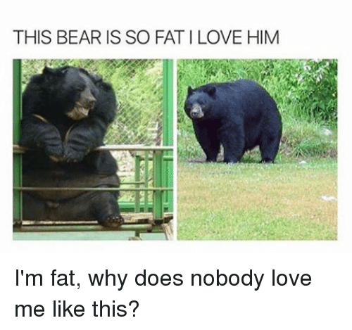 This Bear Is So Fatilove Him I M Fat Why Does Nobody Love Me Like This Doe Meme On Me Me