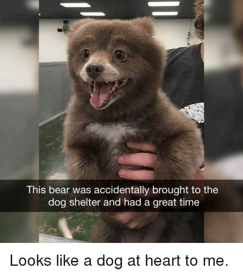 Bear, Heart, and Time: This bear was accidentally brought to the  dog shelter and had a great time Looks like a dog at heart to me.