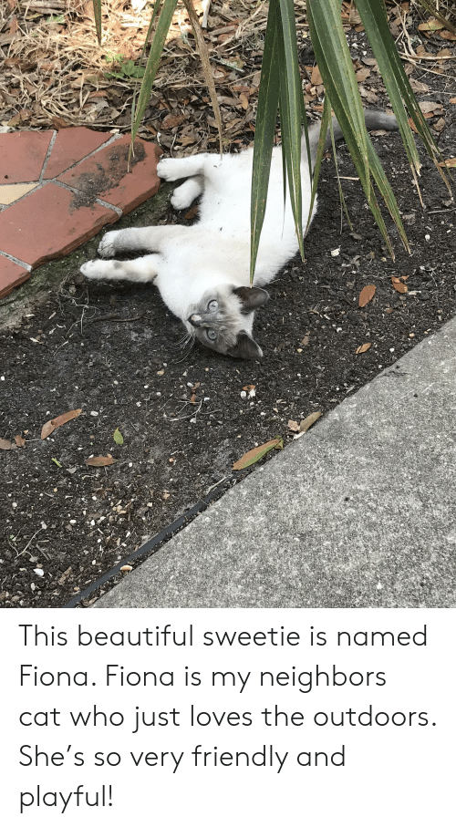Beautiful, Neighbors, and Cat: This beautiful sweetie is named Fiona. Fiona is my neighbors cat who just loves the outdoors. She's so very friendly and playful!