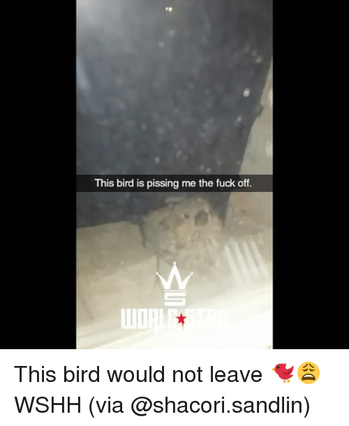 Memes, Wshh, and Fuck: This bird is pissing me the fuck off. This bird would not leave 🐦😩 WSHH (via @shacori.sandlin)