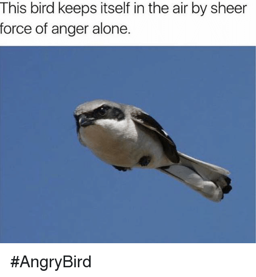Dank, Birds, and Air: This bird keeps itself in the air by sheer  force of anger alone. #AngryBird