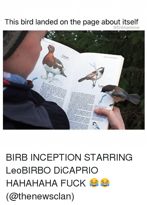 Inception, Memes, and Fuck: This bird landed on the page about itself  @DrSmashlove BIRB INCEPTION STARRING LeoBIRBO DiCAPRIO HAHAHAHA FUCK 😂😂 (@thenewsclan)