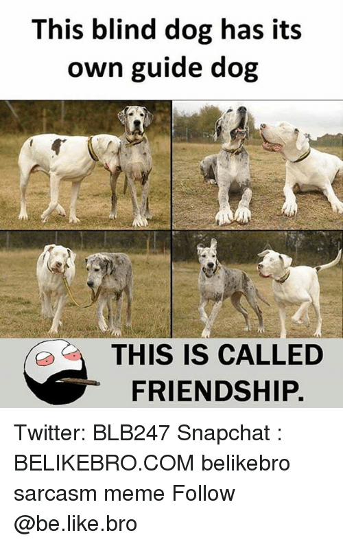 Be Like, Meme, and Memes: This blind dog has its  own guide dog  THIS IS CALLED  FRIENDSHIP. Twitter: BLB247 Snapchat : BELIKEBRO.COM belikebro sarcasm meme Follow @be.like.bro