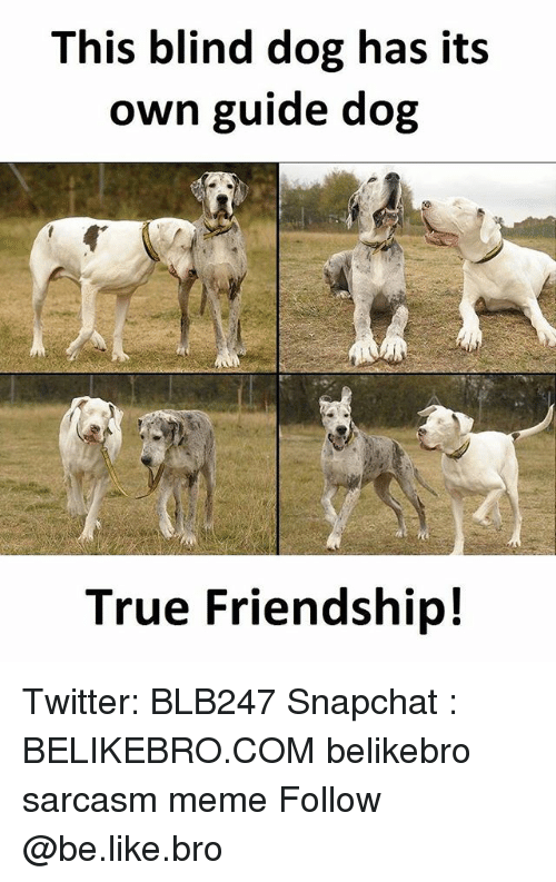 Be Like, Meme, and Memes: This blind dog has its  own guide dog  True Friendship! Twitter: BLB247 Snapchat : BELIKEBRO.COM belikebro sarcasm meme Follow @be.like.bro