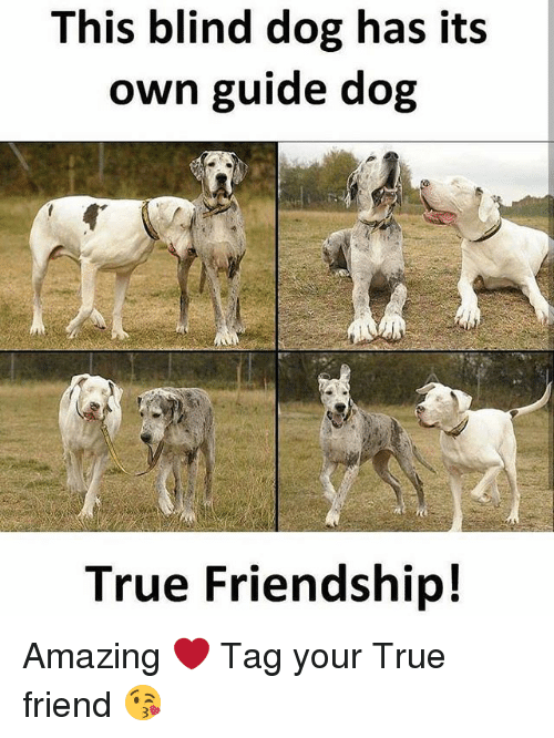 True, Dekh Bhai, and Amazing: This blind dog has its  own guide dog  True Friendship! Amazing ❤️ Tag your True friend 😘