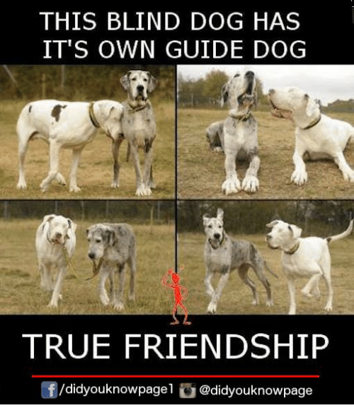 Memes, True, and Friendship: THIS BLIND DOG HAS  IT'S OWN GUIDE DOG  TRUE FRIENDSHIP  囝/d.dyouknowpagel @didyouknowpage