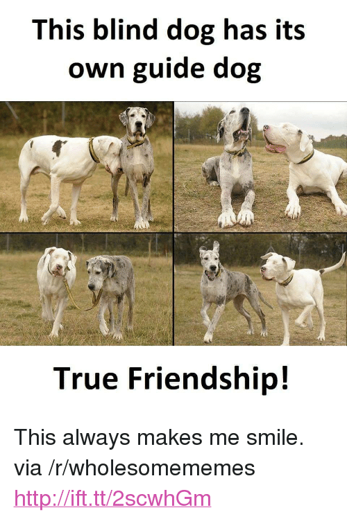"True, Http, and Smile: This blind dog has its  own guide dog  True Friendship! <p>This always makes me smile. via /r/wholesomememes <a href=""http://ift.tt/2scwhGm"">http://ift.tt/2scwhGm</a></p>"
