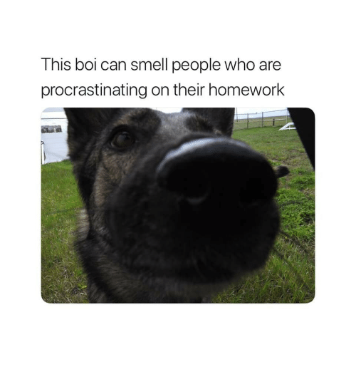 Smell, Homework, and Boi: This boi can smell people who are  procrastinating on their homework